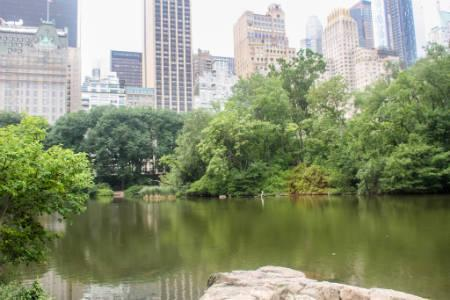 Midtown East Rentals - Central Park